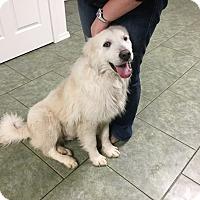 Adopt A Pet :: Sid  *Adopted - Tulsa, OK