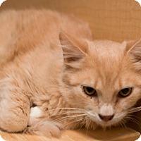 Adopt A Pet :: Yoda - Modesto, CA