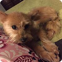Adopt A Pet :: Sammy - Great Bend, KS