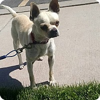 Adopt A Pet :: Bosley - Meridian, ID