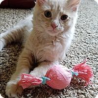 Adopt A Pet :: Mercury - Marietta, GA
