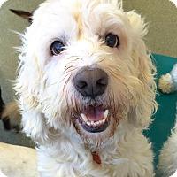 Adopt A Pet :: BOSLEY (video) - Los Angeles, CA