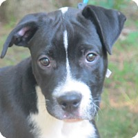 Adopt A Pet :: Rocky - Harrisonburg, VA