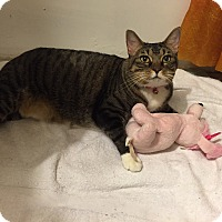 Adopt A Pet :: Adele - West Palm Beach, FL