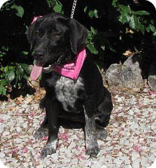 Labrador Retriever/Australian Cattle Dog Mix Dog for adoption in Providence, Rhode Island - Lucille