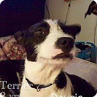 Adopt A Pet :: Dougie - DeForest, WI