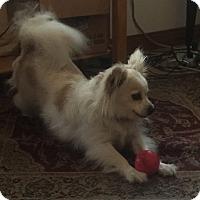Adopt A Pet :: George Harrison - Worcester, MA