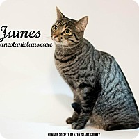 Adopt A Pet :: James - Modesto, CA