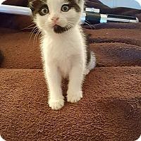 Adopt A Pet :: Rey - Tampa, FL