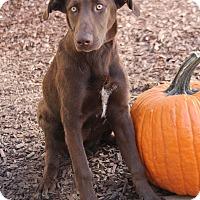 Adopt A Pet :: CoCo - Yuba City, CA