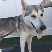 Adopt A Pet :: Jake - WAGONER, OK
