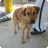 Adopt A Pet :: Teddy - Newnan City, GA