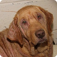 Adopt A Pet :: Gracie #2 & Kiya - Towson, MD