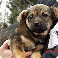 Adopt A Pet :: Remy (4 lb) Video! - West Sand Lake, NY