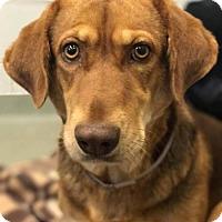 Adopt A Pet :: Jennifer Saunders - Brooklyn, NY