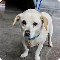 Adopt A Pet :: Brenda loves kids! - Los Angeles, CA