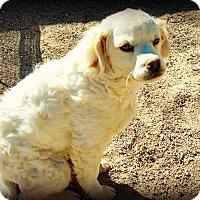 Adopt A Pet :: Spanky - Tijeras, NM