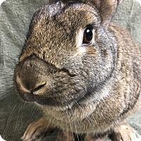 Adopt A Pet :: Felix - Edinburg, PA