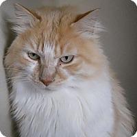 Adopt A Pet :: Howard - Colorado Springs, CO