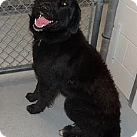 Adopt A Pet :: Sampson - Wayne, NJ