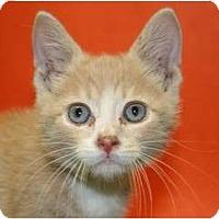 Adopt A Pet :: QUARTZ - SILVER SPRING, MD
