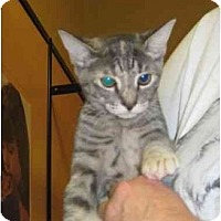 Adopt A Pet :: Moonbeam - Jenkintown, PA
