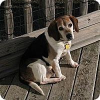 Adopt A Pet :: Odie - Novi, MI