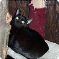 Adopt A Pet :: Lucetta - Secaucus, NJ