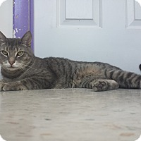 Adopt A Pet :: Christian Bale - Richboro, PA