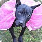 Adopt A Pet :: Emmalee