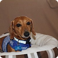 Adopt A Pet :: Fred - Marcellus, MI