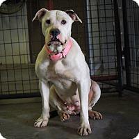 Adopt A Pet :: Dixiebelle - Marlinton, WV