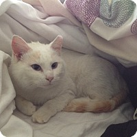 Adopt A Pet :: Justina - Horsham, PA