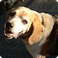 Adopt A Pet :: Billy B - Creston, CA