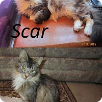 Adopt A Pet :: Lil Moe and Scar - Absecon, NJ