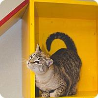 Adopt A Pet :: TINKERBELL - Poteau, OK