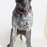 Adopt A Pet :: Milo (Foster) - Baton Rouge, LA