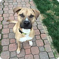 German Shepherd Dog Mix Dog for adoption in Westminster, Maryland - Jasper