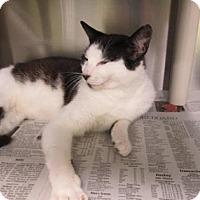 Adopt A Pet :: Magic - Greenville, NC