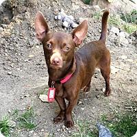 Adopt A Pet :: Mauricio - Buffalo, NY