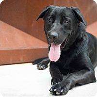 Adopt A Pet :: Joe Manganiello - Brooklyn, NY