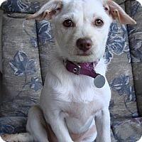 Adopt A Pet :: Mimi - Hurricane, UT