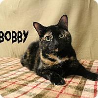 Adopt A Pet :: Bobby - Melbourne, KY