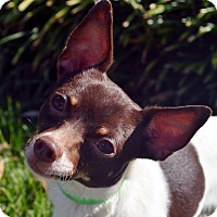 Adopt A Pet :: Jake - Bridgeton, MO