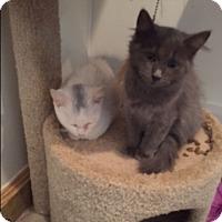 Adopt A Pet :: Blanca - Ashland, OH