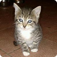 Adopt A Pet :: Fonzie - Hewitt, NJ