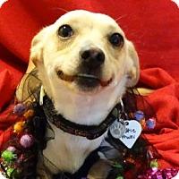 Adopt A Pet :: Tuttie Fruitie - Vacaville, CA