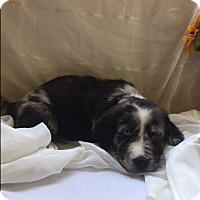 Adopt A Pet :: Mrs. Fluffy (ETAA) - Spring Valley, NY