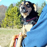 Adopt A Pet :: Andy - Lakeville, MN