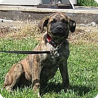 Adopt A Pet :: Willa - Linden, TN